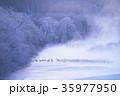 丹頂 冬 雪裡川の写真 35977950