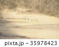丹頂 冬 雪裡川の写真 35978423