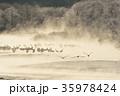 早朝 丹頂 冬の写真 35978424
