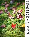 もみじ 落ち葉 苔の写真 35996099
