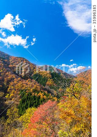 秋の自然風景 35996385