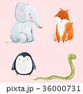 ぞう ゾウ 象のイラスト 36000731