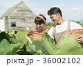 シェフ 畑  ビストロ 36002102