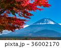 富士山 紅葉 秋の写真 36002170