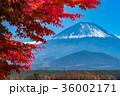 富士山 紅葉 秋の写真 36002171