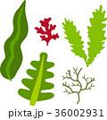 海藻のイラストセット 36002931