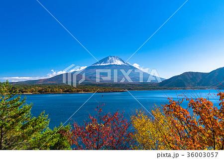 黄葉・富士山 36003057