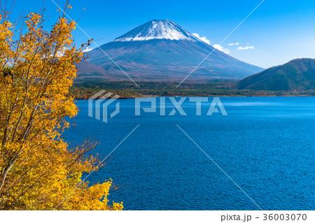 黄葉・富士山 36003070