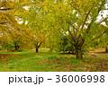 自然 落葉 黄葉の写真 36006998