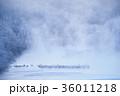 丹頂 冬 雪裡川の写真 36011218