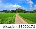 水田 田んぼ 田舎道の写真 36020178