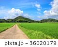 水田 田んぼ 田舎道の写真 36020179