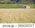 コンバインでの稲刈 36026557