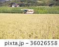 コンバインでの稲刈 36026558