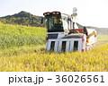 コンバインでの稲刈 36026561