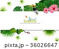 トロピカル 熱帯 背景のイラスト 36026647