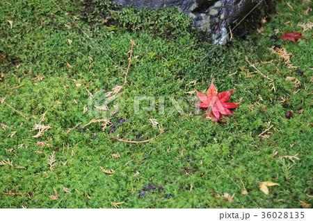 若狭神宮寺の秋景色 36028135