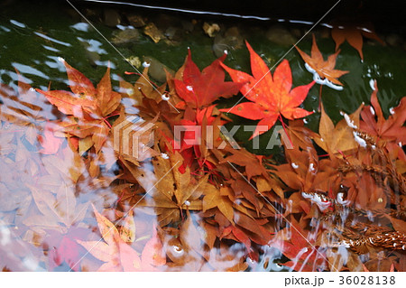 若狭神宮寺の秋景色 36028138