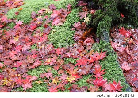 若狭神宮寺の秋景色 36028143