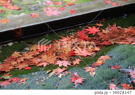 若狭神宮寺の秋景色 36028147