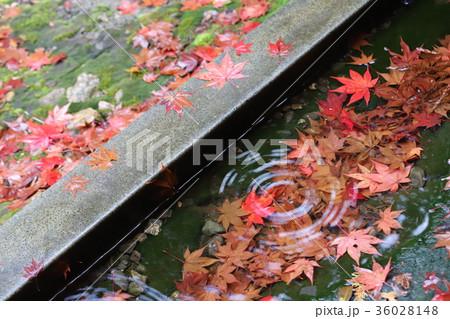若狭神宮寺の秋景色 36028148