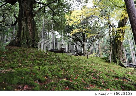 若狭神宮寺の秋景色 36028158