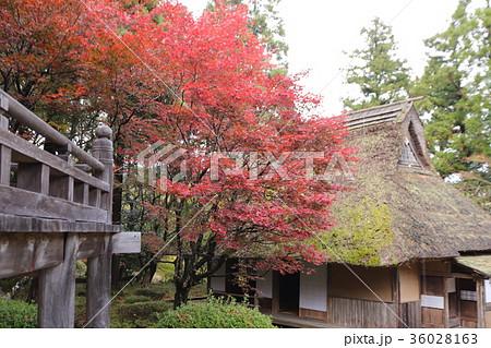 若狭神宮寺の秋景色 36028163