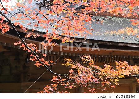 若狭神宮寺の秋景色 36028164
