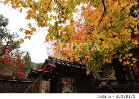 若狭神宮寺の秋景色 36028179