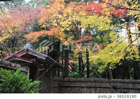 若狭神宮寺の秋景色 36028180