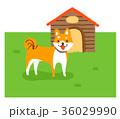 犬小屋と犬 36029990