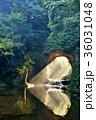 滝 濃溝の滝 亀岩の洞窟の写真 36031048