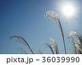青空とススキ 36039990