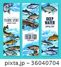サカナ 魚 魚類のイラスト 36040704
