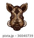 イノシシ 猪 動物のイラスト 36040739