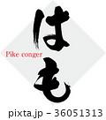 はも Pike congerのイラスト 36051313
