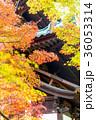 東福寺 紅葉 秋の写真 36053314