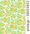 オレンジ 水色 36053652