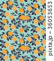 オレンジ 紺 36053653
