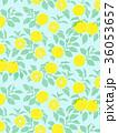 柚子 柑橘類 フルーツのイラスト 36053657