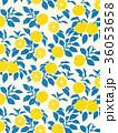 柚子 柑橘類 フルーツのイラスト 36053658