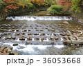 京都 紅葉 もみじの写真 36053668