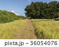 鳩間島 草道 田舎の写真 36054076