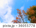 青空 秋 トウカエデの写真 36055778