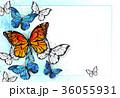 バックグラウンド 背景 蝶のイラスト 36055931