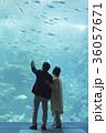 老夫婦と海 36057671