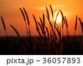 夕方 夕 夕暮の写真 36057893