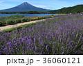富士山 ラベンダー 大石公園の写真 36060121
