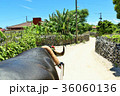 沖縄 竹富島 島の写真 36060136