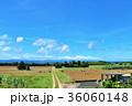 青空 沖縄 波照間島の写真 36060148